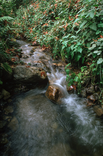 lush-stream-pfeiffer-state-beach.jpg