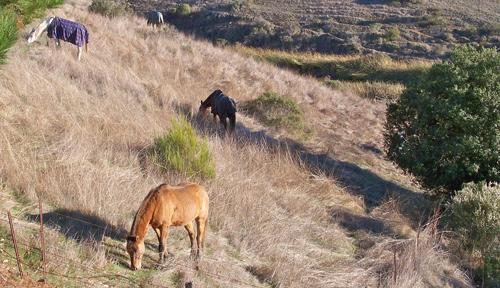 9 5K horses-and-persimmon  K Horses